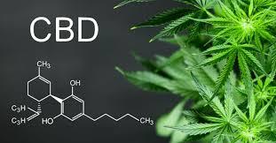Annabiol CBD Oil – dangereux – en pharmacie – pas cher